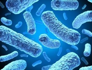 microbios-1421709069435_615x470