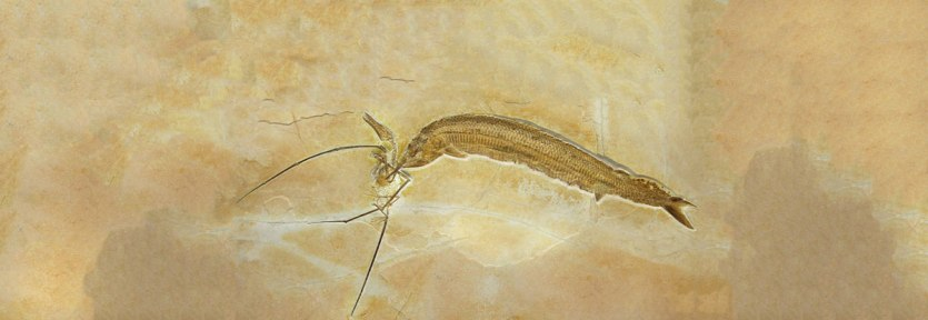 Spécime WDC CSG 255: um Aspidorhynchus e um Rhamphorhynchus em um embate fatal