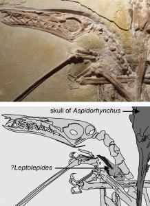 Seção do espécime que mostram a forma como os animais estão entrelaçados.
