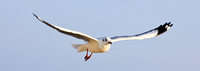 reverse_engineering_bird_wide1